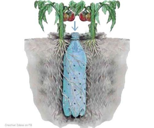 Bỏ túi ngay 7 cách tái sử dụng chai nhựa trong làm vườn - Ảnh 7