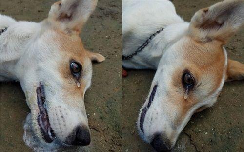 Xúc động hình ảnh chú chó bị trộm đầu độc, rớt nước mắt khi hấp hối - Ảnh 1