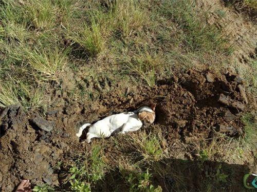 Xúc động hình ảnh chú chó bị trộm đầu độc, rớt nước mắt khi hấp hối - Ảnh 2