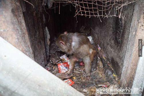 Giải cứu chú khỉ bị kẹt 25 năm trong ngôi nhà bỏ hoang - Ảnh 2