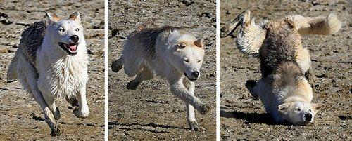 """Cười ngặt nghẽo với loạt khoảnh khắc các chú chó """"tự làm khó mình"""" - Ảnh 12"""