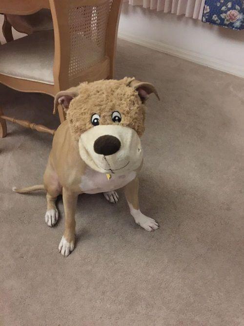 """Cười ngặt nghẽo với loạt khoảnh khắc các chú chó """"tự làm khó mình"""" - Ảnh 7"""