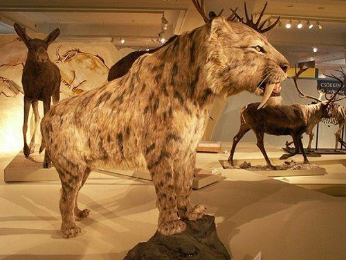 10 động vật khiến con người tuyệt chủng nếu hồi sinh - Ảnh 4