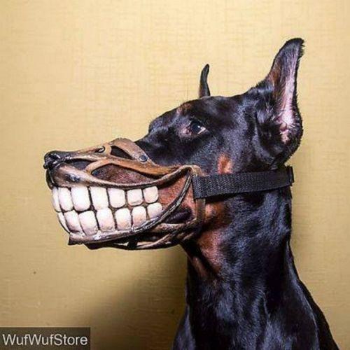 """""""Chết cười"""" với những kiểu rọ mõm chó độc đáo có """"1-0-2"""" - Ảnh 9"""