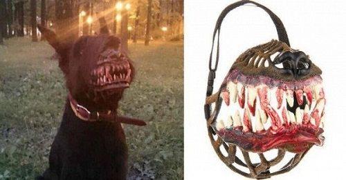 """""""Chết cười"""" với những kiểu rọ mõm chó độc đáo có """"1-0-2"""" - Ảnh 10"""