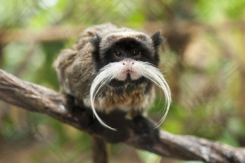 Thế giới tự nhiên kỳ thú và những loài động vật khiến bạn khó tin chúng có thật trên đời - Ảnh 8