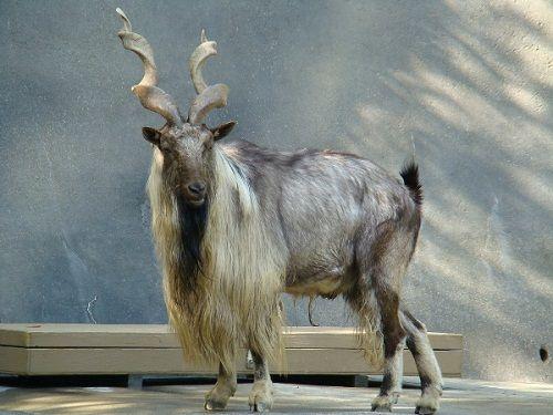 Thế giới tự nhiên kỳ thú và những loài động vật khiến bạn khó tin chúng có thật trên đời - Ảnh 3