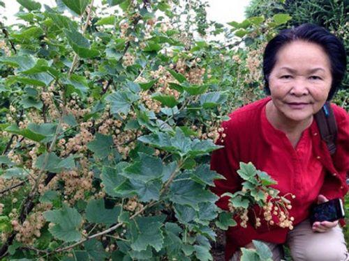 """Sự thật về quả dại nước ngoài giá """"trên trời"""" ở Việt Nam - Ảnh 8"""