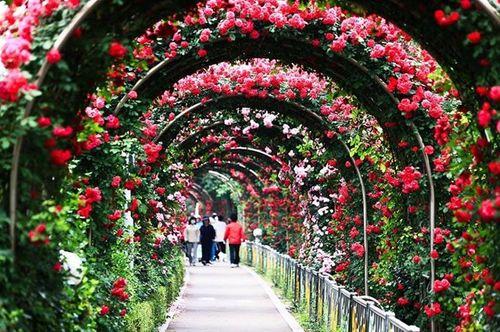 Xuân Bắc sẽ dẫn dắt các cặp đôi chìm đắm trong nụ hôn tại Lễ hội hoa hồng - Ảnh 3