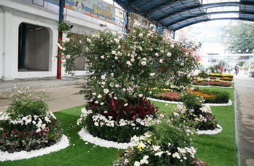 Điểm vui chơi 8/3: Ngắm trăm hoa đua sắc trước ngày khai mạc Lễ hội hoa hồng Bulgaria - Ảnh 1