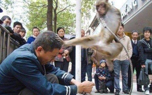 Khỉ quấy phá ở Hà Nội: Bị khỉ cắn có thể mắc bệnh dại tử vong - Ảnh 2