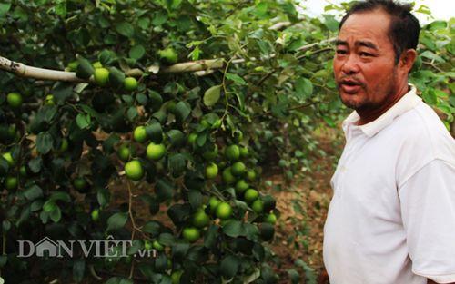 Nông dân kiếm tiền tỷ nhờ trồng cây táo - Ảnh 1