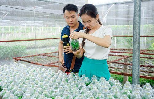 """Những chàng trai từ bỏ cơ hội ở """"trời tây"""" về Việt Nam làm giàu bằng nông nghiệp - Ảnh 3"""