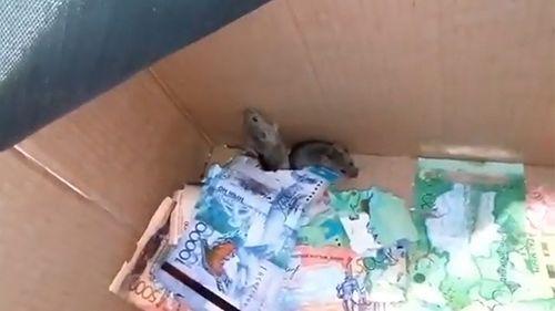 Hai chú chuột chui vào cây ATM gặm sạch tiền mặt - Ảnh 1