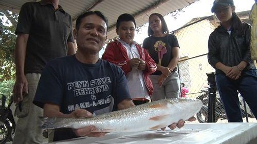 Quảng Nam: Bắt được cá lạ dài gần 1 mét nghi cá sủ vàng quý hiếm - Ảnh 1