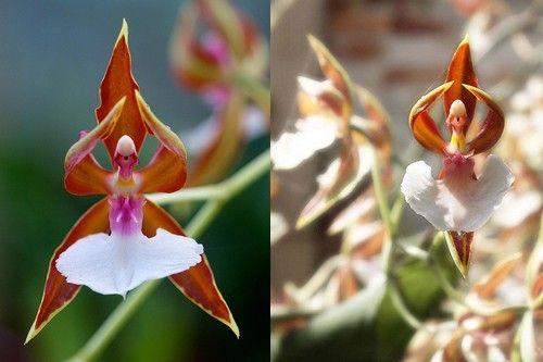 Ngắm những loại hoa khiến nhiều người tròn mắt vì hình dáng chẳng giống ai - Ảnh 1