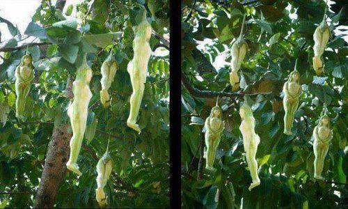 Ngắm những loại hoa khiến nhiều người tròn mắt vì hình dáng chẳng giống ai - Ảnh 6