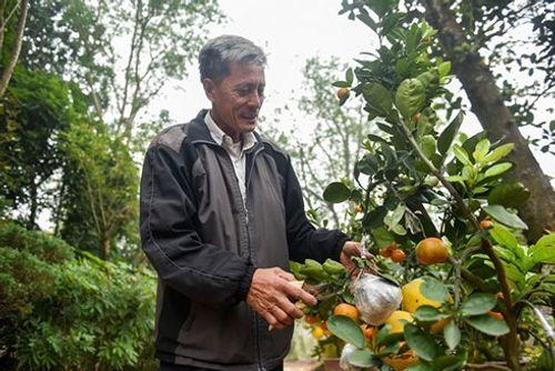 Lão nông thu về hàng trăm triệu nhờ ghép 10 loại quả dịp Tết - Ảnh 1