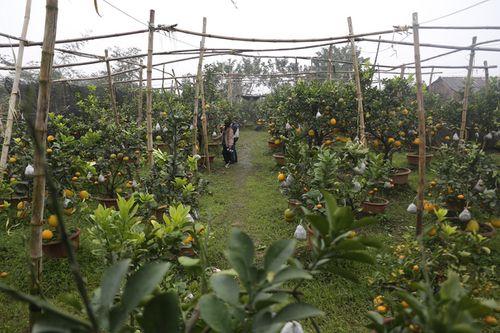 Lão nông thu về hàng trăm triệu nhờ ghép 10 loại quả dịp Tết - Ảnh 3