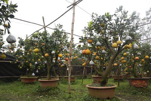 Lão nông thu về hàng trăm triệu nhờ ghép 10 loại quả dịp Tết - Ảnh 4