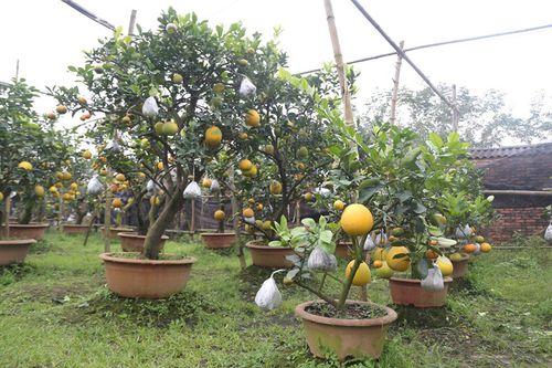 Lão nông thu về hàng trăm triệu nhờ ghép 10 loại quả dịp Tết - Ảnh 5