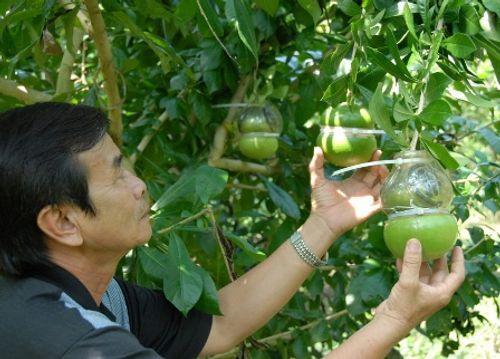 Quà Tết siêu độc: Đào tiên hồ lô giá nửa triệu đồng cho Tết Nguyên Đán - Ảnh 1