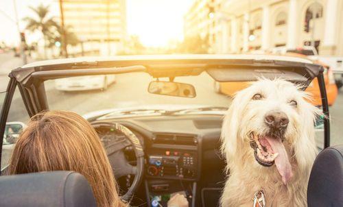 Để an toàn, tài xế cần tránh 7 hành động sau khi ngồi lên ô tô  - Ảnh 3