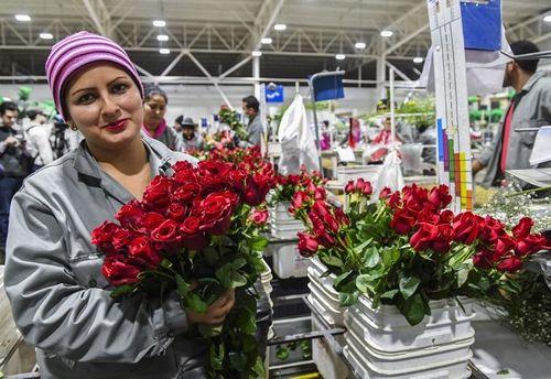 Hình ảnh không khí đón Valentine trên khắp thế giới - Ảnh 5