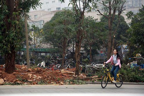 """""""Xe đạp Uber"""" đang trở thành bãi rác phế liệu ở Trung Quốc - Ảnh 7"""