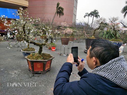 Chiêm ngưỡng cây mai cổ rêu phong có giá trăm triệu - Ảnh 1