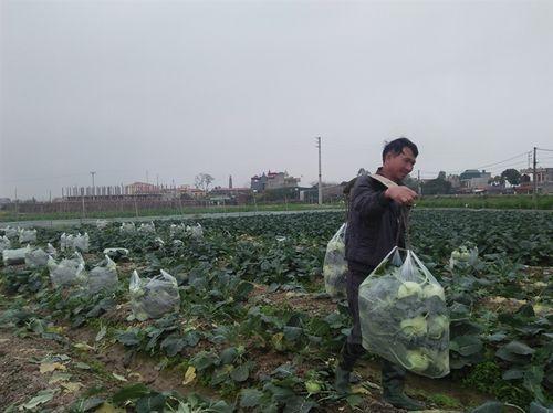 """Nông dân lại """"khóc"""" vì nông sản rớt giá thê thảm trong những ngày đầu năm - Ảnh 3"""