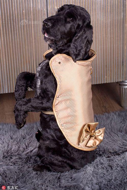 Điều bí mật trong chiếc áo dành cho chó có giá bằng cả căn biệt thự - Ảnh 1