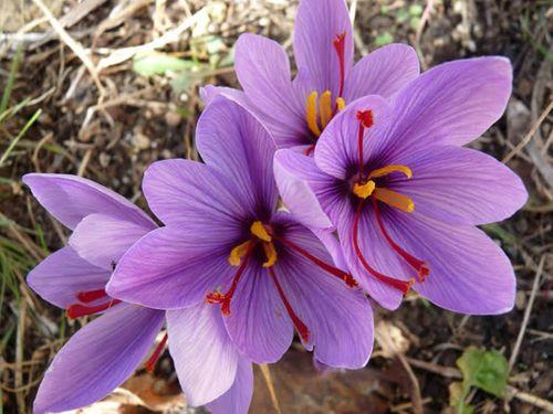 """""""Choáng váng"""" với giá tiền của 6 loài hoa đắt nhất thế giới  - Ảnh 6"""