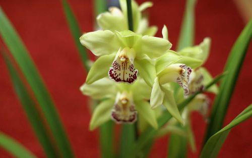 """""""Choáng váng"""" với giá tiền của 6 loài hoa đắt nhất thế giới  - Ảnh 3"""
