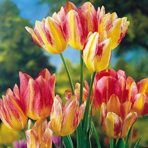 """""""Choáng váng"""" với giá tiền của 6 loài hoa đắt nhất thế giới  - Ảnh 5"""