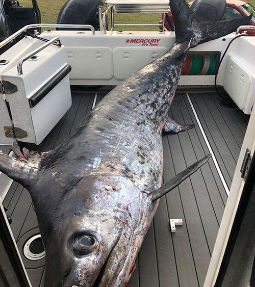 """Cần thủ """"choáng váng"""" vì câu được con cá kiếm nặng hơn 4 tạ  - Ảnh 1"""