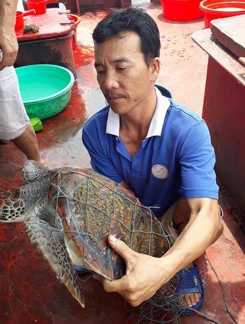 Quảng Ngãi: Rùa biển 300 kg mắc lưới ngư dân - Ảnh 2