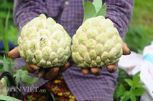 Lạng Sơn: Chợ na Chi Lăng nhộn nhịp mùa thu hoạch, nông dân thu nhập cả trăm triệu đồng - Ảnh 3