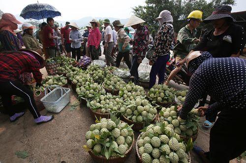 Lạng Sơn: Chợ na Chi Lăng nhộn nhịp mùa thu hoạch, nông dân thu nhập cả trăm triệu đồng - Ảnh 4