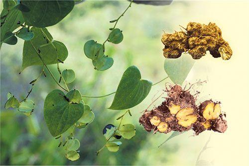 Hamosline - Sản phẩm giảm cân với tinh chất saponin quý hiếm - Ảnh 1