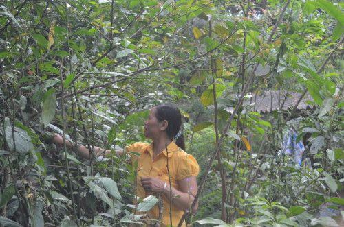 Bài thuốc thần kì chữa khỏi bệnh xương khớp của lương y núi rừng Ba Vì - Ảnh 1