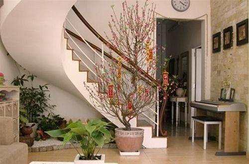 Cách chọn và giữ hoa đào đẹp ngày Tết đón tài lộc vào nhà  - Ảnh 4
