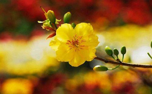 Những loài hoa đẹp trưng bày dịp Tết mang lại may mắn cho gia chủ - Ảnh 1