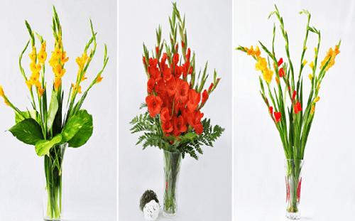 Những loài hoa đẹp trưng bày dịp Tết mang lại may mắn cho gia chủ - Ảnh 3