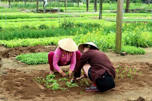 Chùm ảnh: Lễ hội Cầu Bông tại làng rau Trà Quế - Ảnh 15