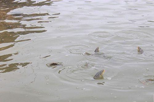 Hà Nội: Hàng vạn người phóng sinh 5 tấn cá xuống sông Hồng - Ảnh 11