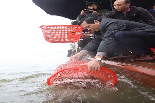Hà Nội: Hàng vạn người phóng sinh 5 tấn cá xuống sông Hồng - Ảnh 4
