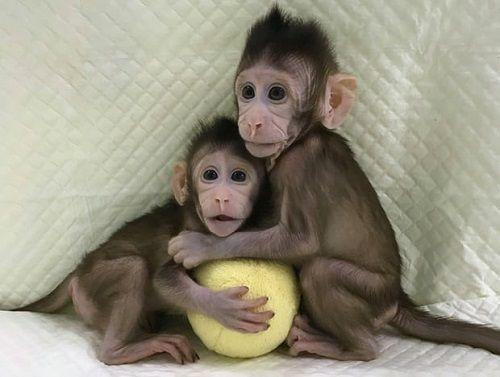 Nhân bản vô tính thành công ở khỉ, tiếp theo sẽ đến con người? - Ảnh 1