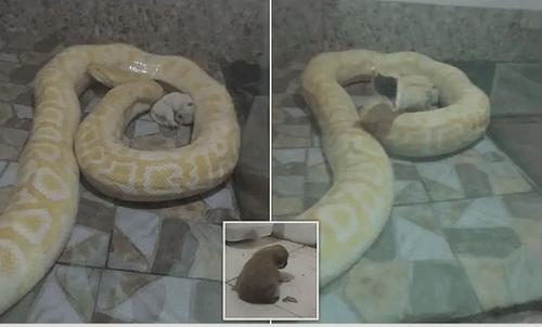 Sở thú Trung Quốc nuôi trăn bằng chó con đổ lỗi cho nhân viên  - Ảnh 1