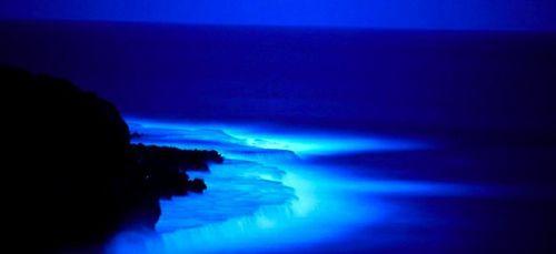 Khám phá đại dương bí ẩn khi đêm về - Ảnh 3